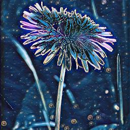 mniszek wildflower dzikiekwiaty polishphotography