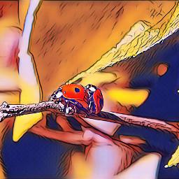 biedronki ladybugs polishphotography nature naturephotography
