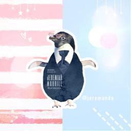 pastel pastelcolors penguin animal tuxedo ircpenguin freetoedit