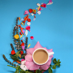 coffee photography drink flowers colorful
