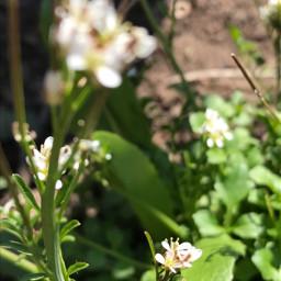beautifulweeds beautiful flowers weeds