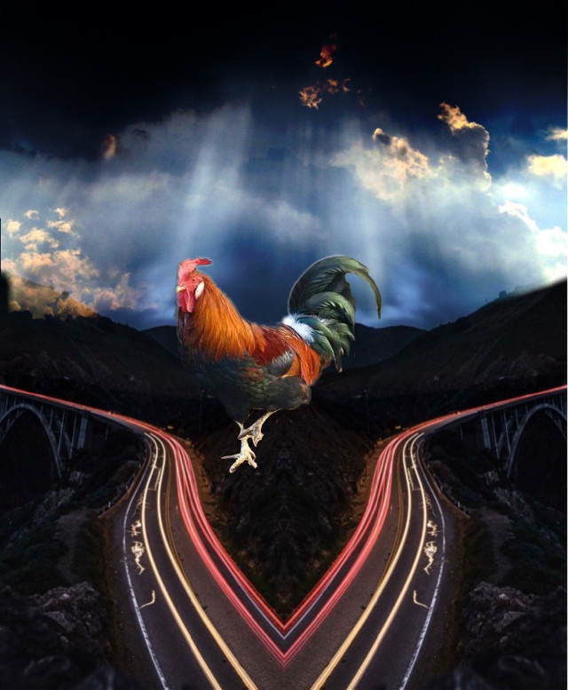 #freetoedit yup, a  #chickencrossingtheroad