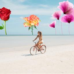 freetoedit flowers rose creative beach