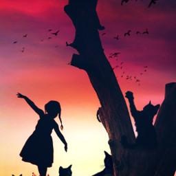 freetoedit vipshoutout sillouette cat sunset
