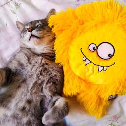vote love cute cat cats freetoedit pccutepets