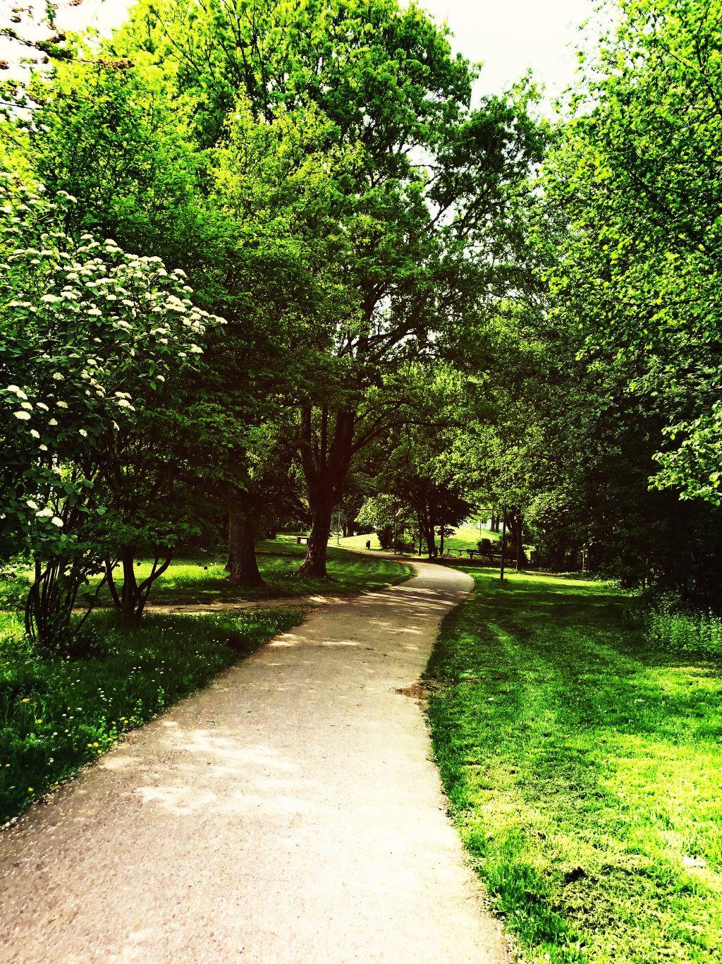 #freetoedit #interesting #photography #nature #trees #park