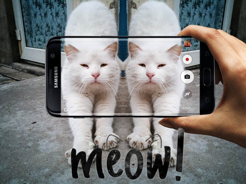 #meow #freetoedit #cat  #mirroreffect