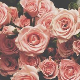 roses vintage aesthetic tumblr freetoedit