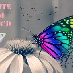 butterflybrush buterflys freetoedit