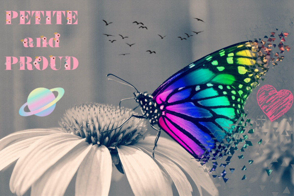 #buterflys