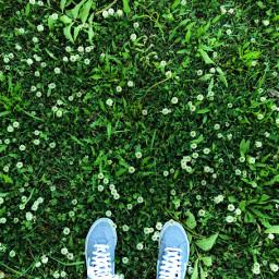 feet grass dandelions vans shoes freetoedit