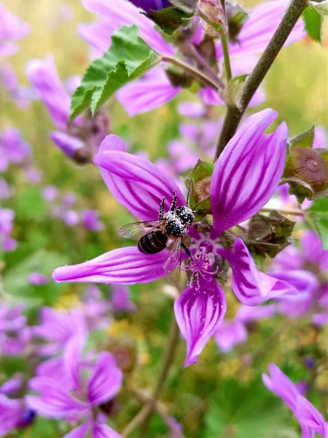 Hello my friends 😊😁 it's long time #freetoedit  #Flower #spring #bee #natur #macro #focus