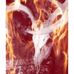 deerskull onfire nature photography