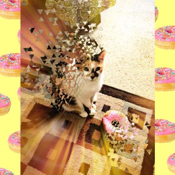#freetoedit #cat #donut #crop #hd2 #dispersion #mask #light #squarefit #idontfeelsogood