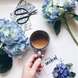 hydrangeas blue coffee coffeetime