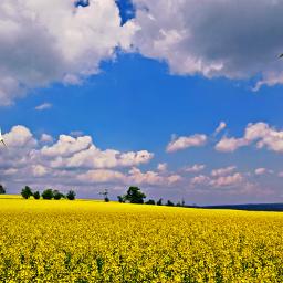 nature yellow lumia950xl