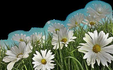 freetoedit scdaisy daisy