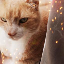 ecbokeh bokeh twinklelights cat challenge