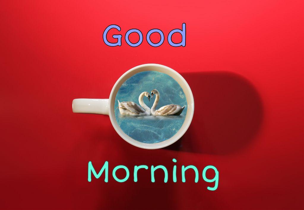 Good morning friends 🍀 #freetoedit