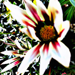 freetoedit flowers photooftoday