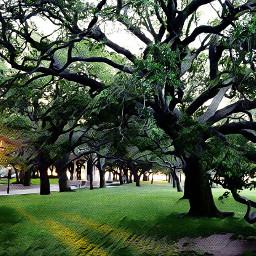 trees tree battery