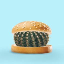 freetoedit burger hamburger cactus weird irchamburgerbun
