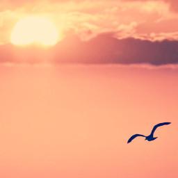 freetoedit nature endoftheday serenity goldenhour