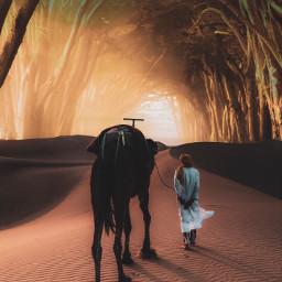 creative imagination_infocus create forest desert
