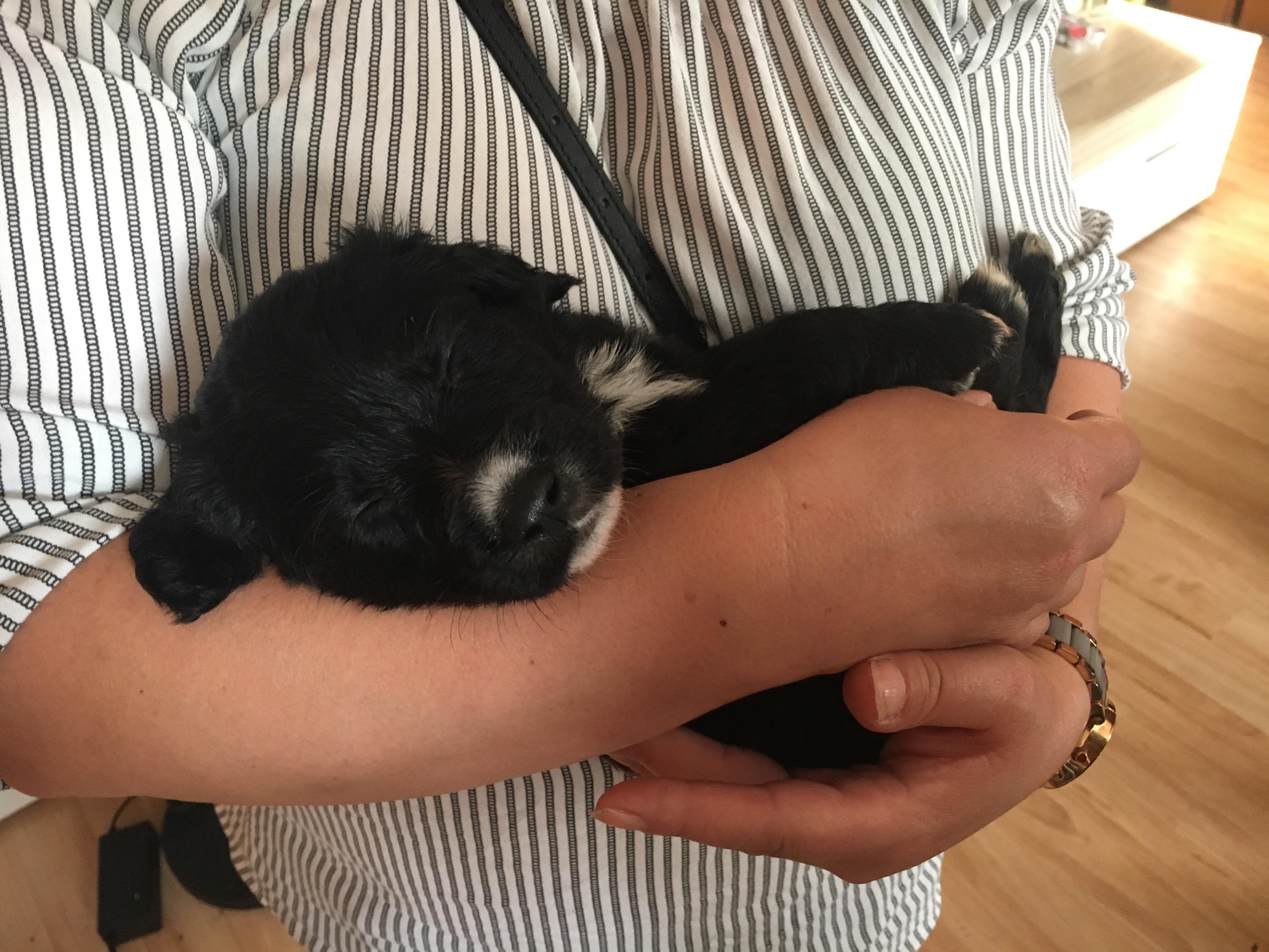 Cute Dog Puppy Sleep Sleeping Black Doggo Image By