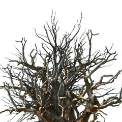 freetoedit doubleexposure forest trees tree