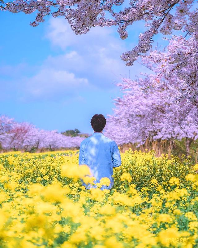 #photographer #photography #boy #blooming #한국 #봄 #korea #army #flowers #freetoedit