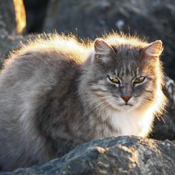 wildcat dawning baybank
