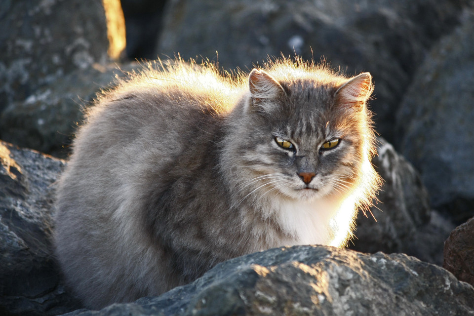 #wildcat #dawning #baybank