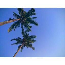 treesoflife freetoedit pcupintheair upintheair