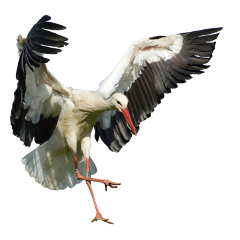 bird heron egret freetoedit