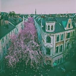 aesthetic city cherryblossoms freetoedit