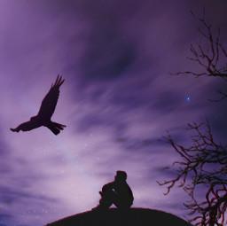 freetoedit silhouette night sky solitary