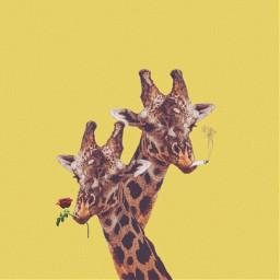 freetoedit Giraffe Remixit Smoke aesthetics yellow animalprint animal