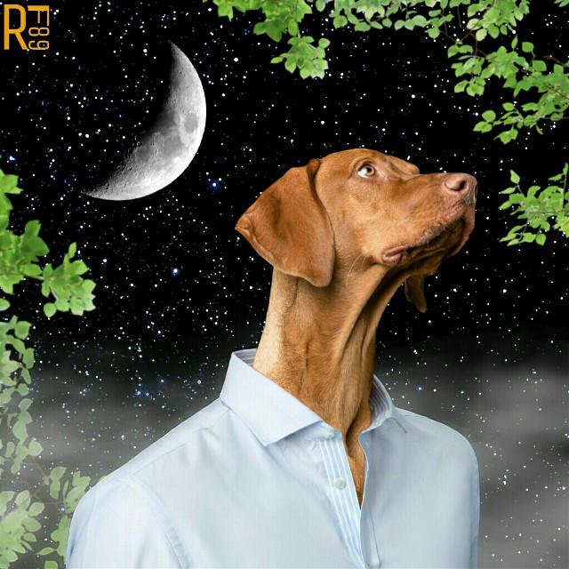 HUMAN-DOG  Composition stickers + @lily1424 Moon  #editstepbystep #manipulation #surreal #myedit #rf89