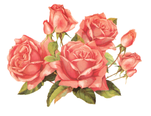 Roses Pink Coral Flowers Floral Green Freetoedit