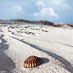 pcbeaches beaches freetoedit assateagueisland myoriginalphoto