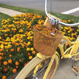 pcyellow yellow bicycle