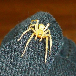 freetoedit myphotography spider housespider harmless