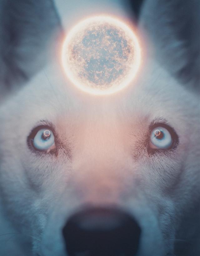 Doggie       #freetoedit #art #sun #photography #dog