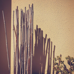 bamboosticks suculents softgrungetexturedwallbackground warmsunsetlightandshadows keepitsimple