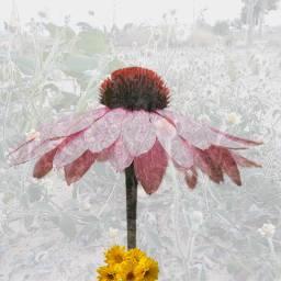 freetoedit flowercrown editedwithpicsart campeon ircpinkflower