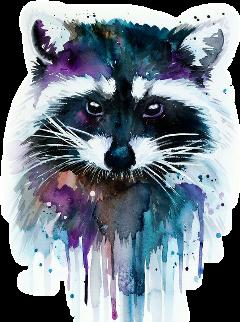 racoon freetoedit scraccoon raccoon