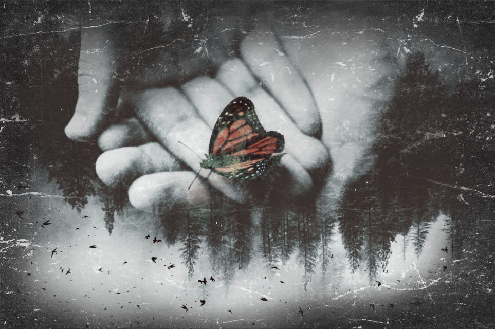#freetoedit #effects #fx #butterfly #editedbyme i did a remix of this a while back and it was bad, i did a barely better edit. #enjoy
