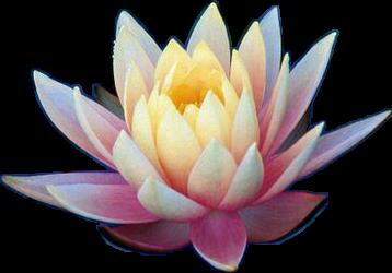 Lotus Flower Pink Garden Lotusflower Mythology Hinduism
