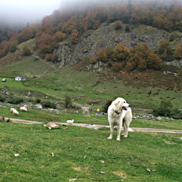 freetoedit photography nature dog mountains